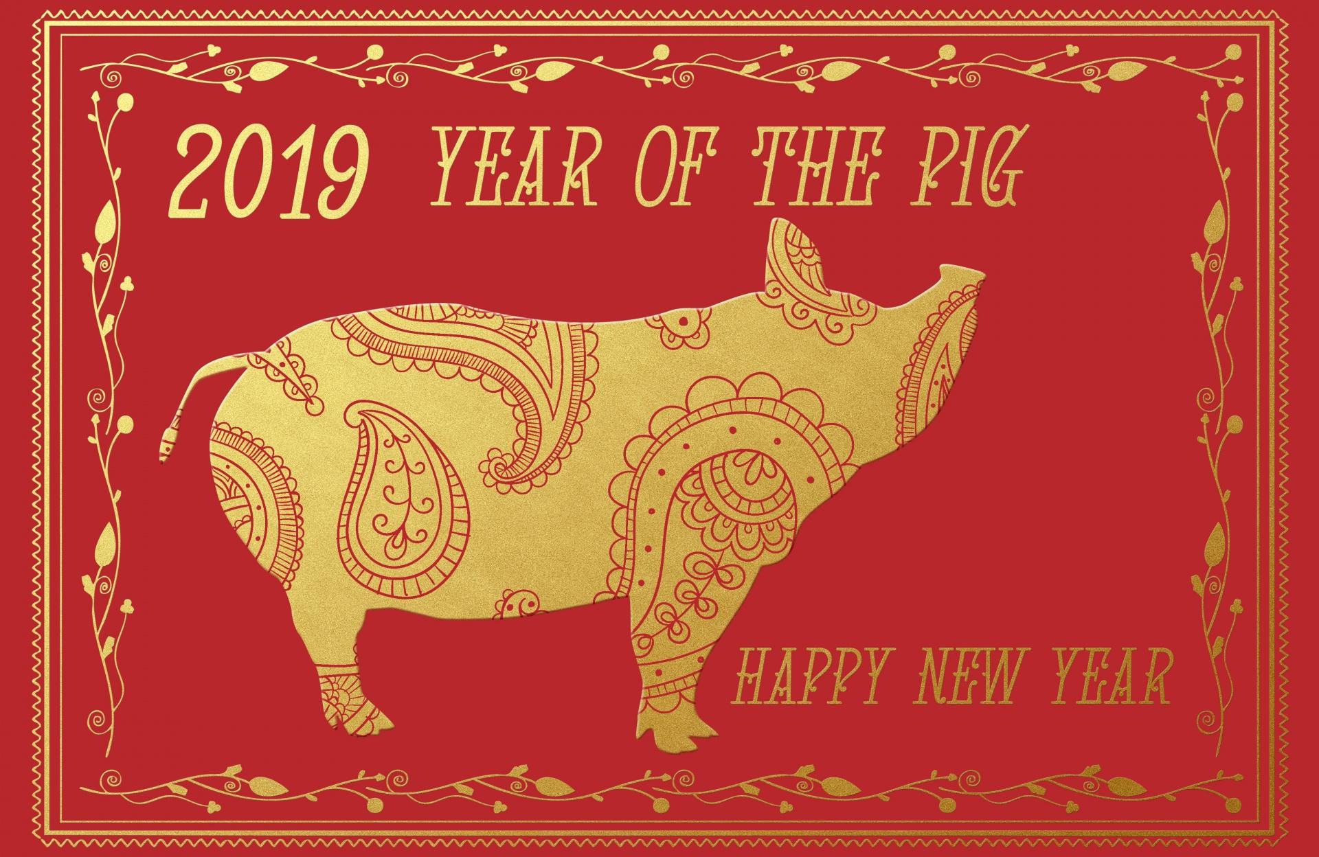 2019 year of pig.jpg