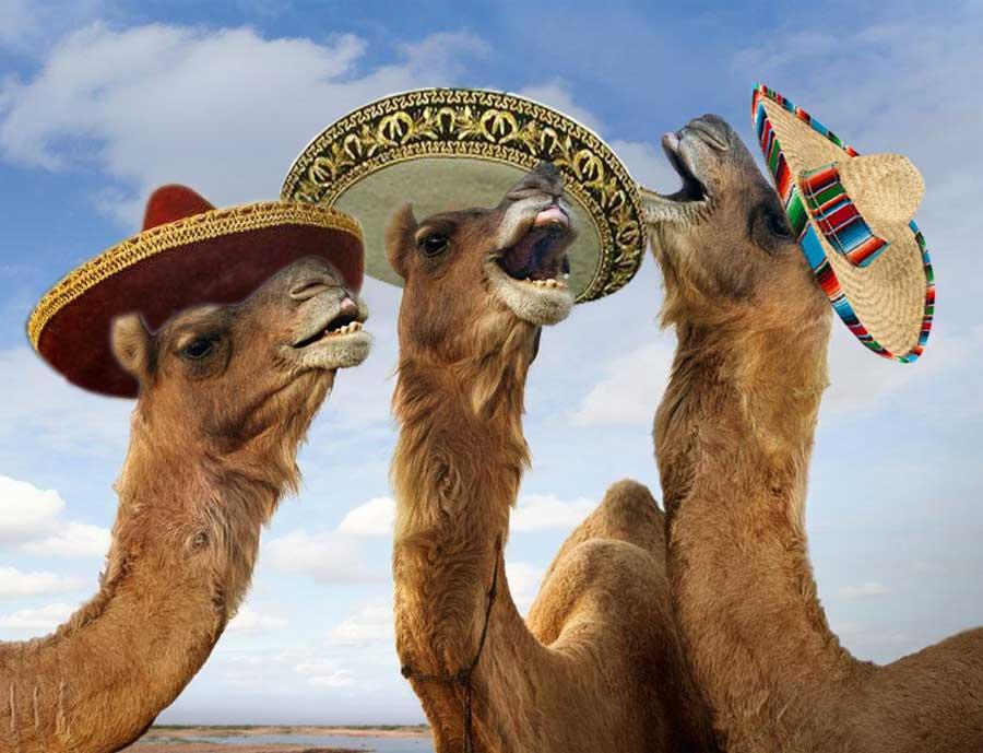 3 camels.jpeg