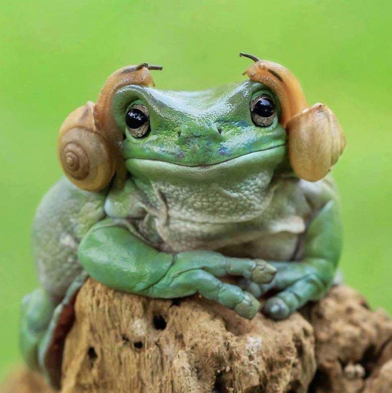 Frog & 2 snails.jpg