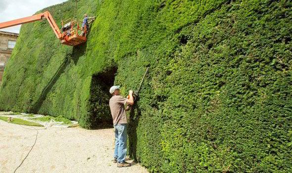 hedge-420410.jpg
