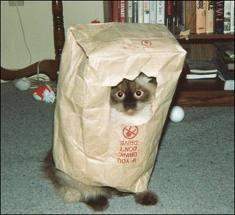 images-cat-bag.jpg